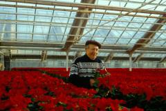 Julstjärnor med Farfar - Nils Andersson