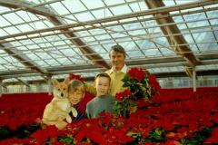 Julstjärnor med Jonas, Martin och Olle