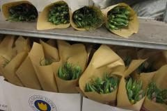 Tulpaner med blåbärsris